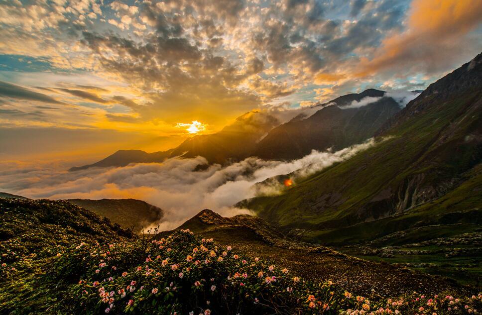 登高望远观美景  杜鹃花开满眼春