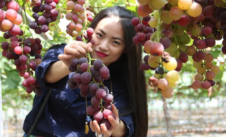 汉源: 把小水果做成增收致富大文章