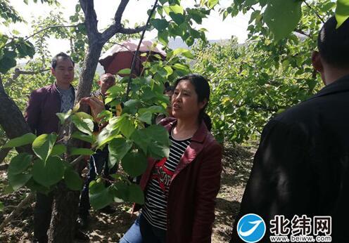 人大代表建议助力果树管理水平提升