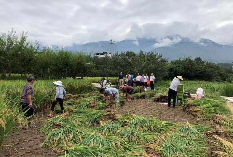 省农业农村厅在汉源组织超级稻验收活动