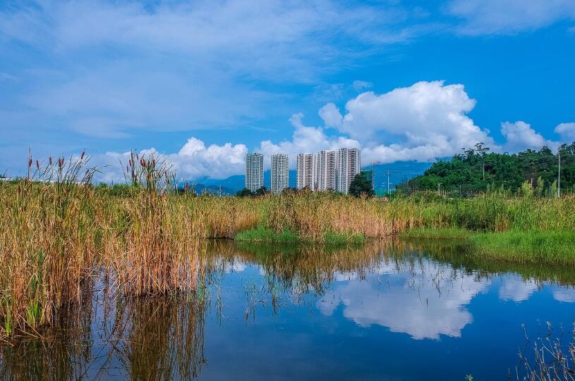 经开区发现一处天然生态湿地