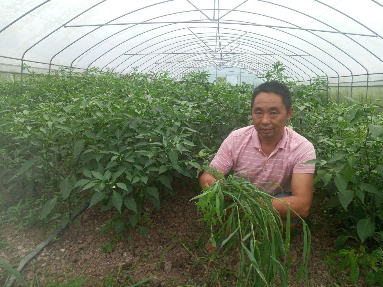 绿色产业助力脱贫攻坚