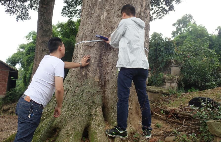 摸清林木资源   加强保护利用