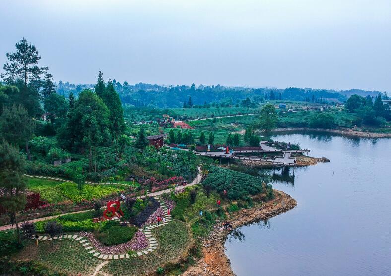 绿色生态景如画  茶旅融合促发展