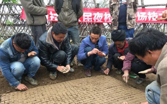 石棉县栗子坪乡元根村开展蔬菜种植技术培训