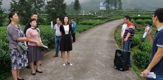 高山生态茶农业标准化项目通过验收