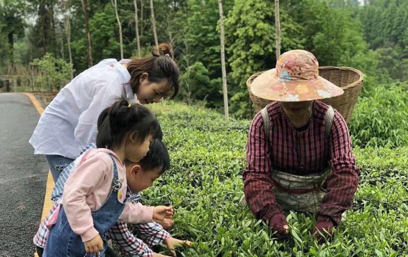 建起一条环线 美了茶乡新村